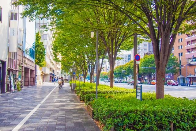 道路と並木道